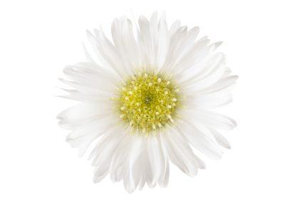 Opale White